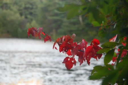 red leaves at cranberry pond