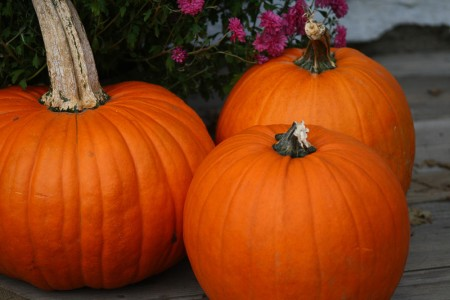 trio of pumpkins