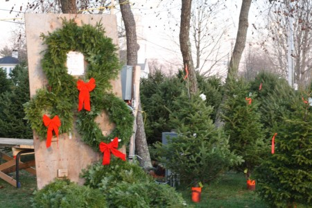 christmas tree lot with wreaths