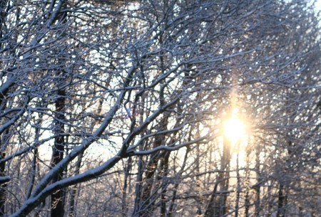 sun through the snow filled trees