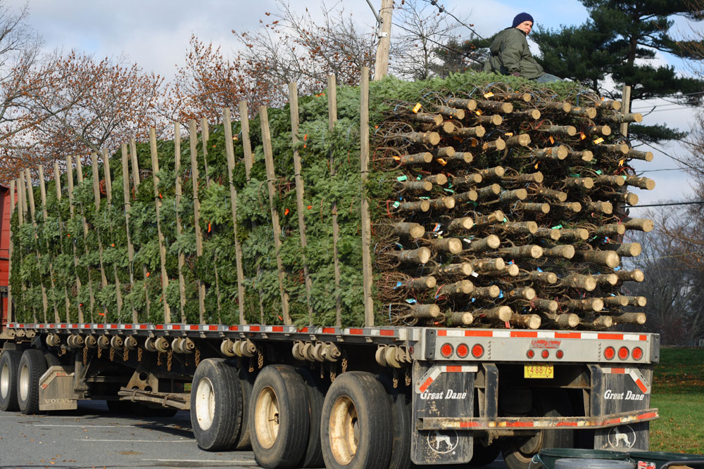 trees on the truck - Sales On Christmas Trees