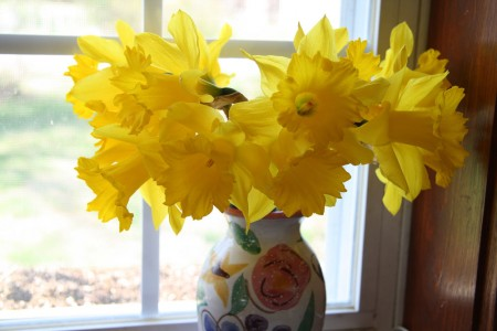 Vase of Daffodils resized for blog