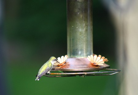 hummingbird on feeder blog size