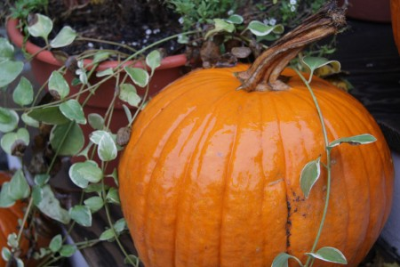 Pumpkin on the Porch blog size