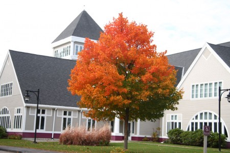 Sugar Maple By Library Front Door blog sizee