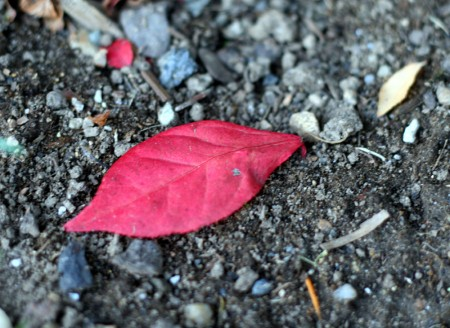 One Red Leaf blog size