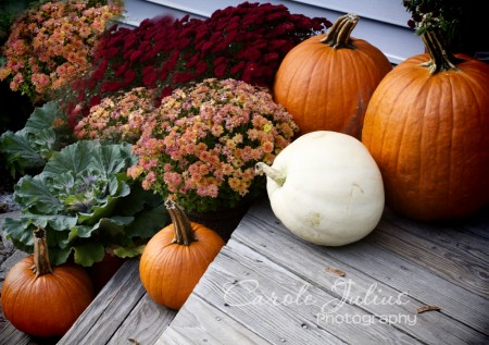 pumpkins and mums for carole knits