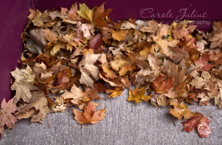 leaves for carole knits