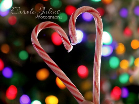 candy cane love for carole knits