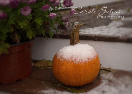 first snow 2014 for carole knits