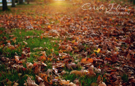 leaves on ground for carole knits