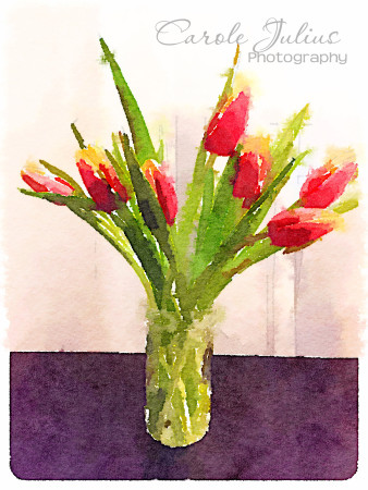red yellow tulips waterlogue for carole knits