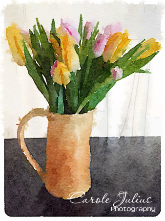watercolor tulips for carole knits