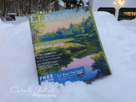 bean spring catalog for carole knits