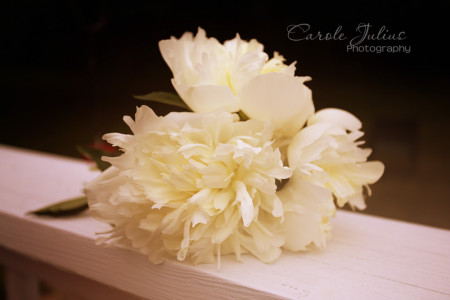 peonies for carole knits
