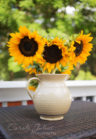 sunflowers in pitcher for carole knits