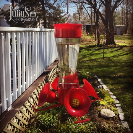 hummingbird feeder out for carole knits