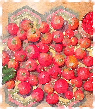 watercolor tomatoes for carole knits