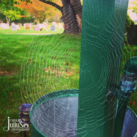 spider-web-for-carole-knits