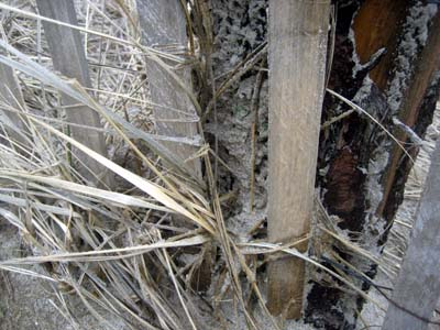beach_grass_fence.jpg
