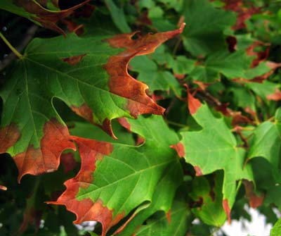 green_brown_leaves.jpg
