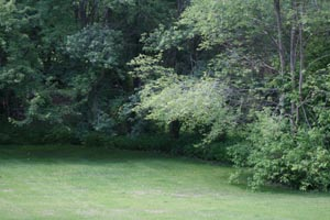 green_backyard.jpg