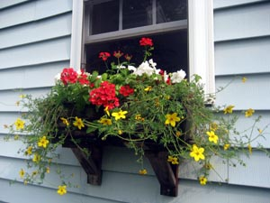 window_box_07.jpg